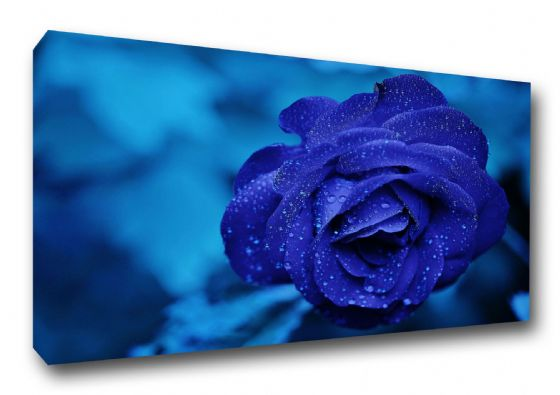 Blue Rose with Water Droplets. Flower Art Canvas. Sizes: A3/A2/A1